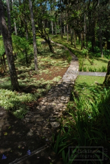 Walking path in the botanic garden at the top of Pico Isabel de Torres, Dominican Republic