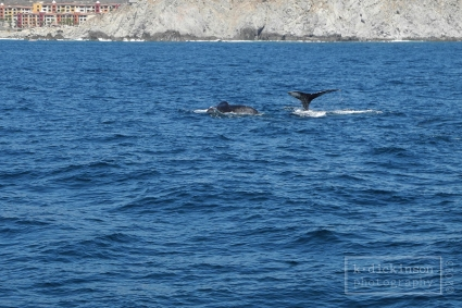 Whale sightings were abundant!