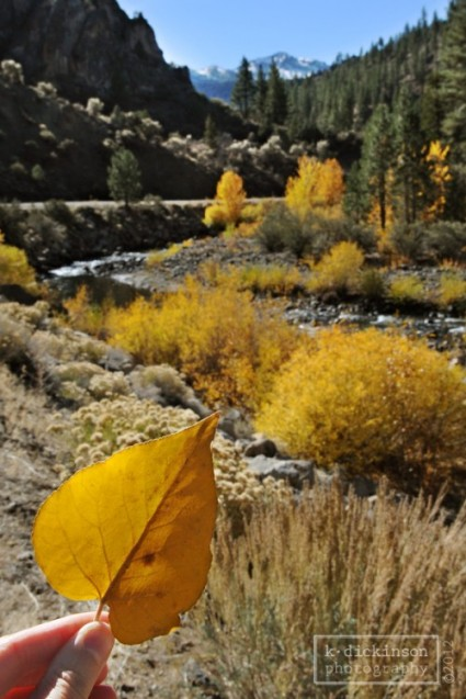 Fall color on the East Fork of the Carson River near Markleeville, California