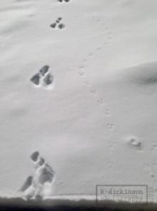 Tracks in Hope Valley