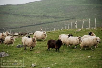 KDickinson Ireland 01