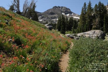 The trail to Winnemucca Lake. Mokelumne Wilderness, northern California.