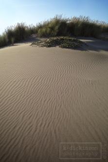 Sand dunes north of Fort Bragg.