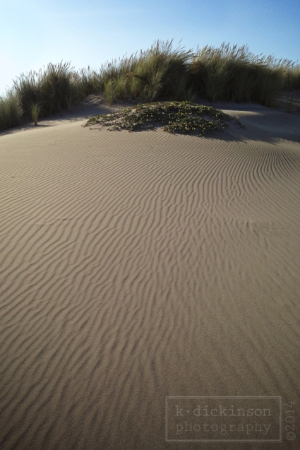 Sand dunes north of Fort Bragg.