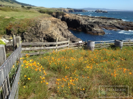 KDickinson - Mendocino Coast
