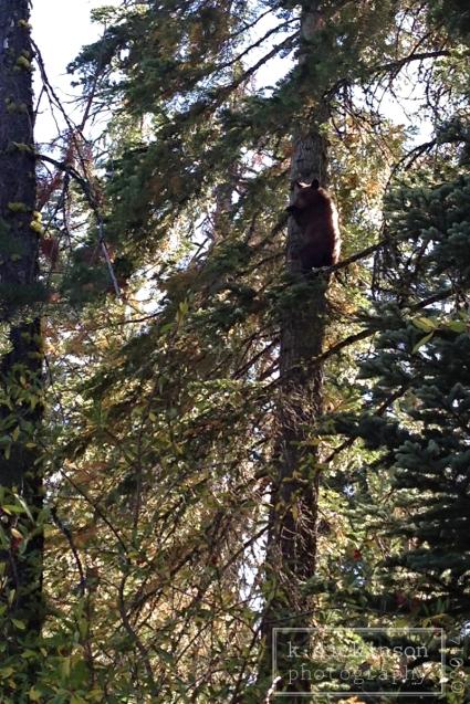 043 Bear Cub