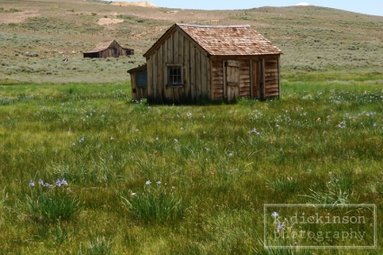 KDickinson Photography - Bodie