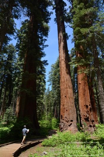 003 Big Trees