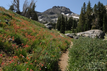 Hiking Trail to Winnemucca Lake, Mokelumne Wilderness