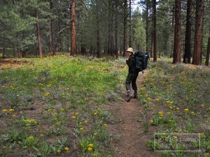 Backpacking in the Carson Iceberg Wilderness