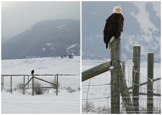 Eagle Collage