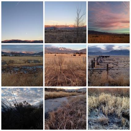 001 Morning Walk Collage