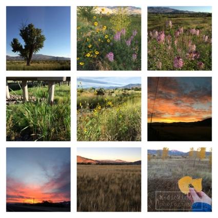 012 Morning Walk Collage