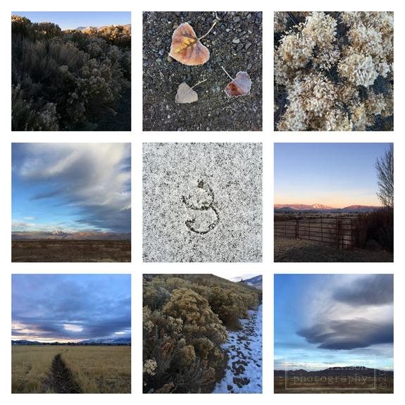 015 Morning Walk Collage