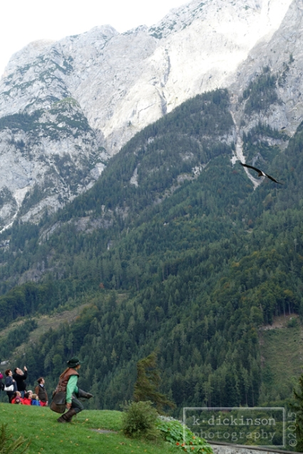 A falconer in Werfen, Austria