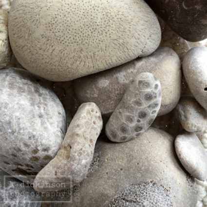 Petoskey stones and other fossils