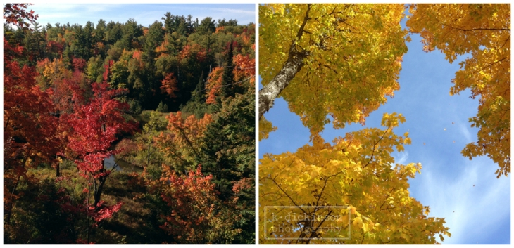 Keep it Simple - Fall Color