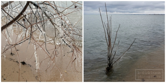 Keep it Simple - Icy Trees