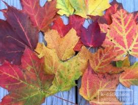 fall-in-munising