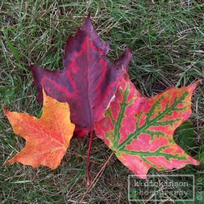 three-leaves