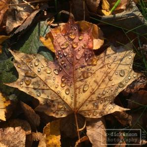 003-wet-leaves