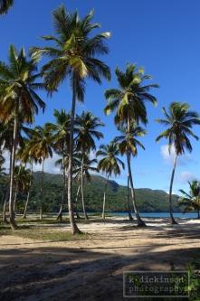 palms-at-playa-rincon