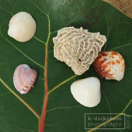 100-beach-finds