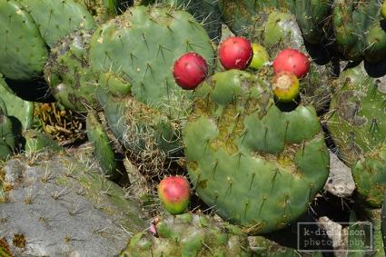 Mendocino Coast Botanical Gardens