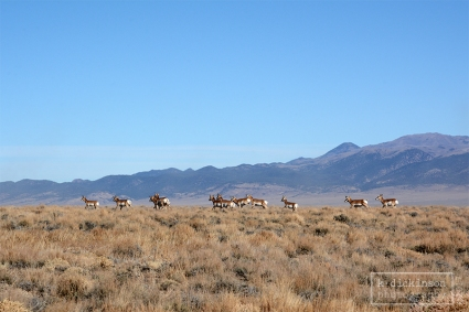 Antelope Crossing