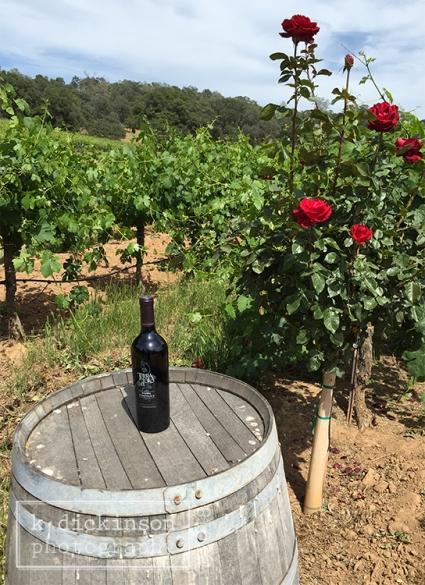 Terra d' Oro Winery